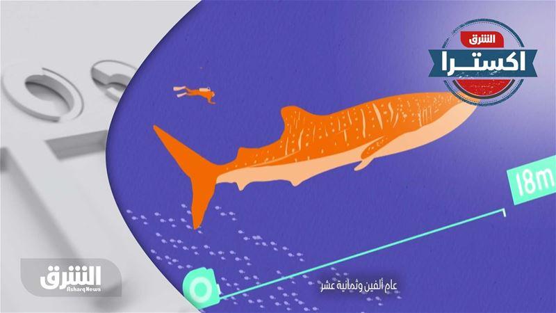 حقيقة شائعة - يشاع أن أسماك القرش أكثر الحيوانات فتكاً في العالم