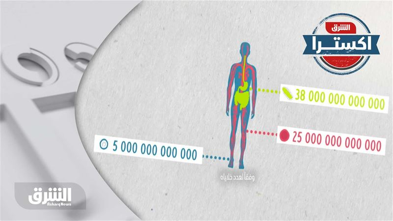 حقيقة شائعة – جميع خلايا أجسادنا تشترك في التراث الجيني نفسه