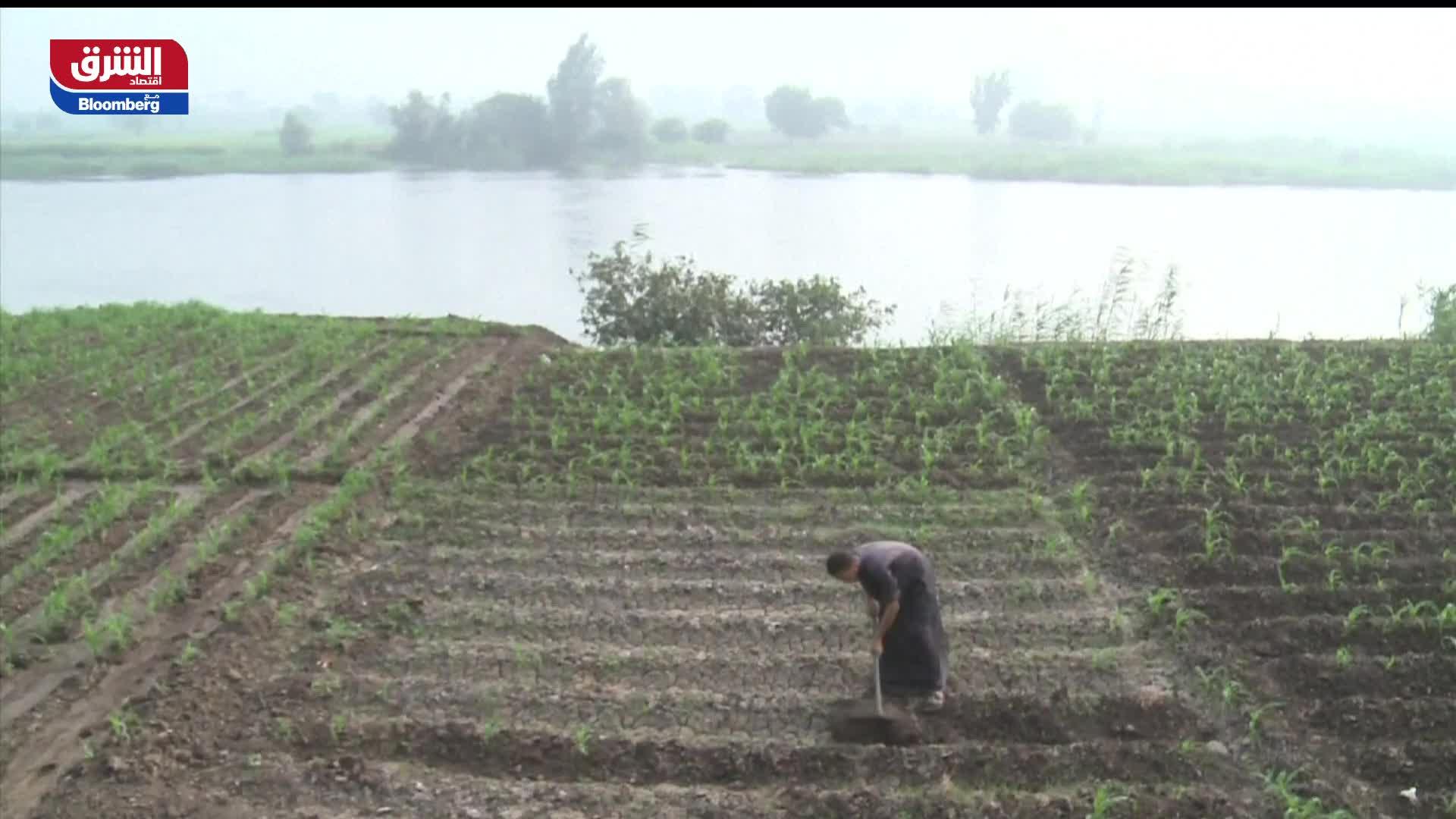 القطاع الزراعي في مصر يواجه تحديات مع تصاعد مخاطر سد النهضة