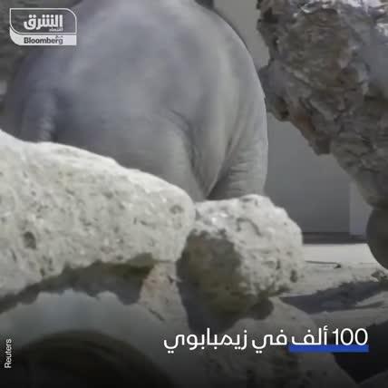 دولة أفريقية تدرس القيام بإعدام جماعي للفيلة