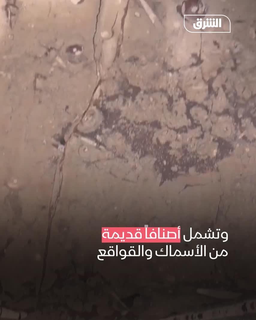 مستحاثات الجنوب الشرقي للمغرب