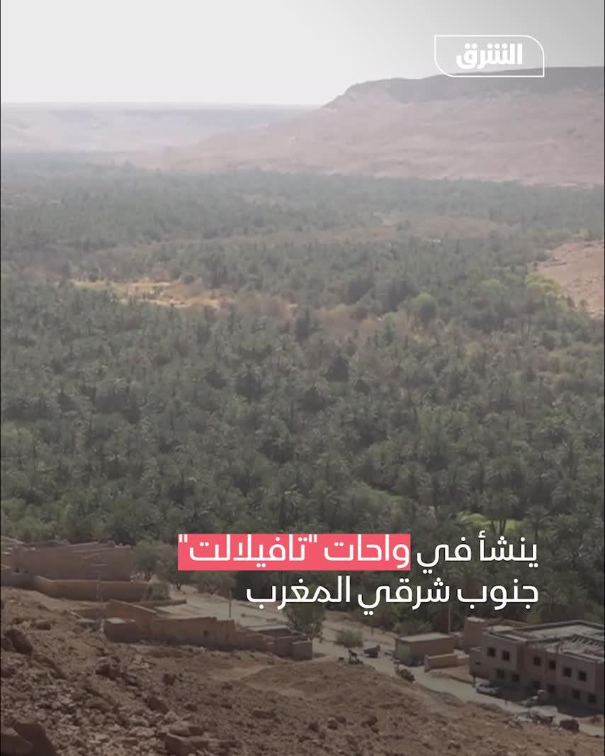 ملك التمور المغربية