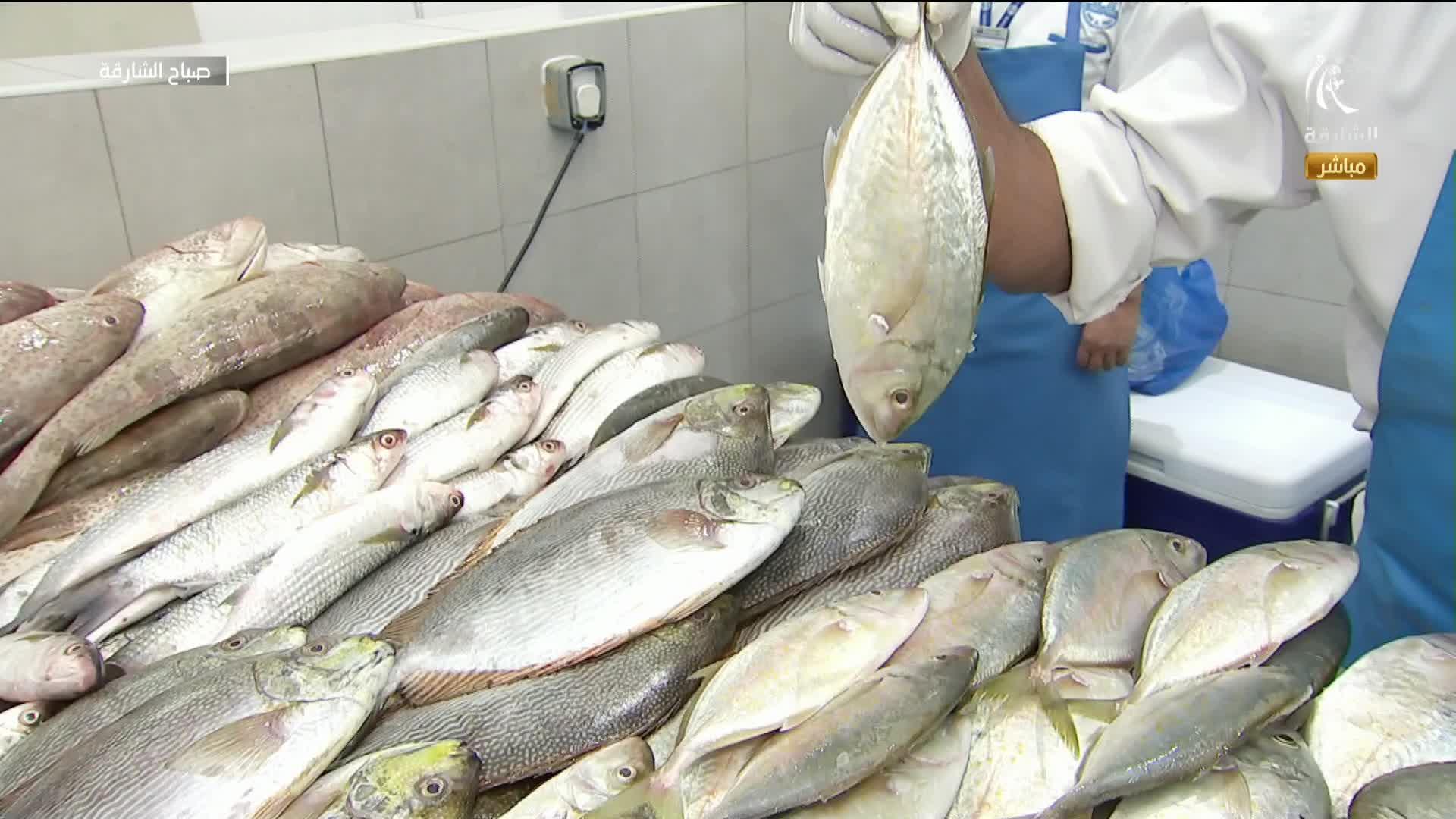 أسعار الأسماك في سوق الجبيل 19-10-2021